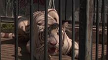台风暴雨影响:动物园被水浸泡 老虎豹子病倒了