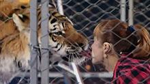 零距离接触 美女用嘴喂老虎