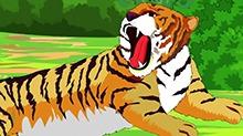 小笨熊科普绘本第34期:万兽之王老虎(五)