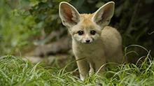 《疯狂动物城》引燃狐狸网售 热点营销莫过火