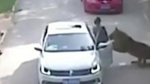 北京八达岭<B>动物</B>园<B>老虎</B>伤人 致一死一伤:女儿虎园下车遭扑咬 母亲施救被咬死