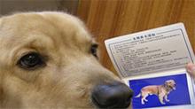 浙江绍兴越城区试水养犬登记证扣分制 扣满12分吊销证件