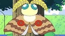 这是蝴蝶还是飞蛾~