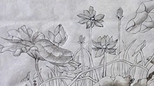5068网国画课程第45期:工笔画 荷花渲染