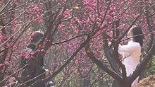 省植物园:赏梅观花陪你度过一个花样年