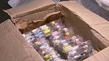"""长沙:792只活体蚂蚁""""闯关"""" 被邮检口岸截获 工匠收获蚁:<B>最大</B>体长超10毫米 <B>国内</B>没有天敌"""