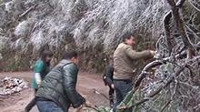 湘西泸溪:冰雪压断树木景区公路受阻