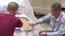 后续:长沙客商购买1万斤靖州红米