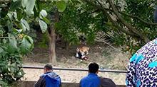 <B>动物</B>闯祸谁之过 宁波:游客逃票误入虎园 遭<B>老虎</B>围攻咬死