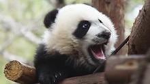 """新闻当事人20170604期:""""熊孩子""""成长记"""