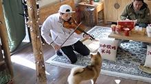 """""""小提琴""""王子大华回归 小H却被琴声吓得满地找尾巴!"""