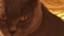 刚洗完澡在取暖器边的猫咪