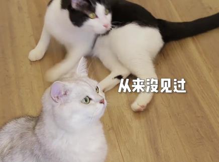 铲屎官和猫咪一起吃海鲜大餐