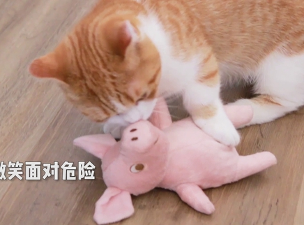 把猫薄荷香水喷满全身猫会吸吗