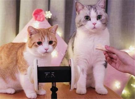花花与三猫家吃播小剧场