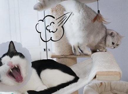 猫大哥腿受伤老二立马谋篡位