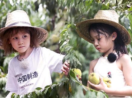 萌娃售卖桃子给父母买礼物